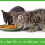 Если у вас дома появилась кошка